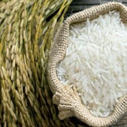 برنج محلی ندا